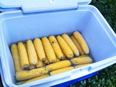 corn but cooler