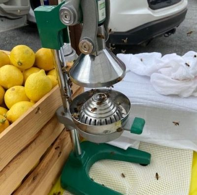 Lemonade Vending And Bees